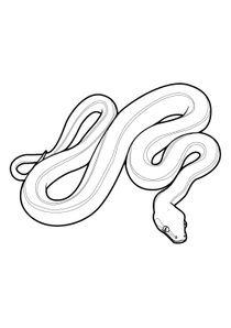 Coloriage Animaux Serpent.Coloriages Serpents A Imprimer Coloriages Animaux