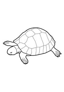Coloriage Tortue.Coloriages Tortues A Imprimer Coloriages Animaux