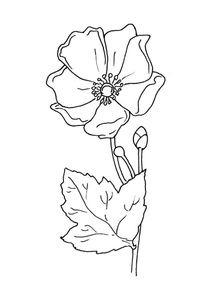 Coloriage Fleur Hippie.Coloriages Fleurs A Imprimer Coloriages Nature