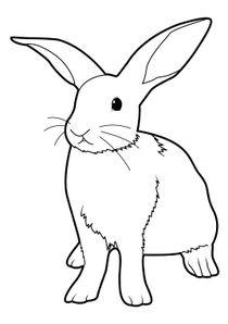 coloriages lapins  u00e0 imprimer