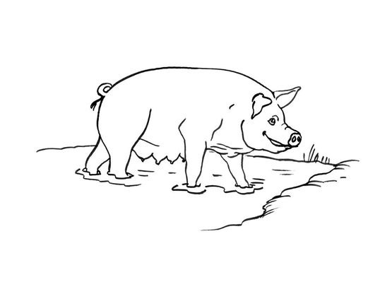 Coloriage Cochon Colorier.Coloriage Cochon 13 Coloriage Cochons Coloriages Animaux