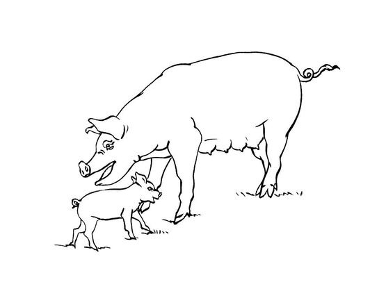 Coloriage Animaux Cochon
