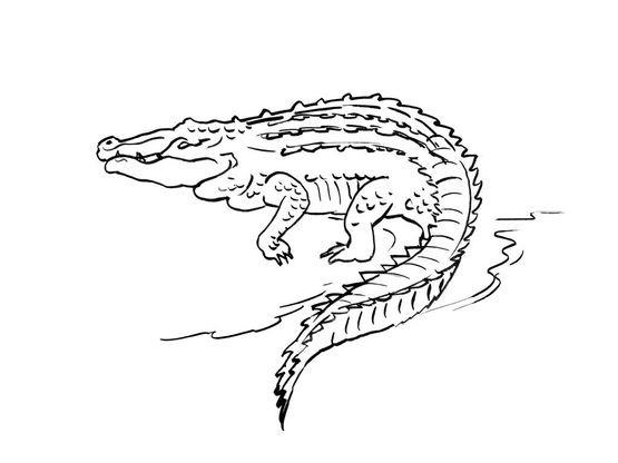 Coloriage De Crocodile A Colorier.Coloriage Crocodile 6 Coloriage Crocodiles Coloriages Animaux