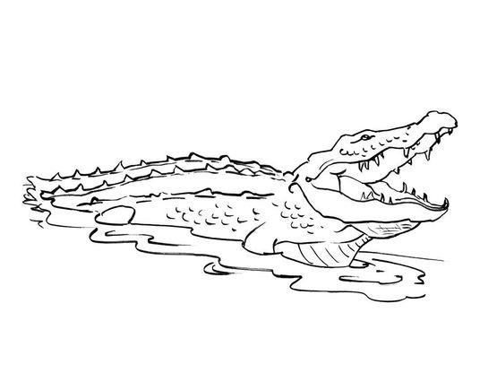 Coloriage De Crocodile A Colorier.Coloriage Crocodile 7 Coloriage Crocodiles Coloriages Animaux