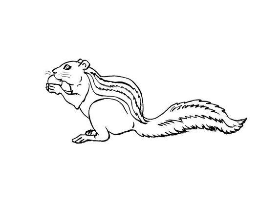 Coloriage Ecureuil Noisette.Coloriage Ecureuil 7 Coloriage Ecureuils Coloriages Animaux