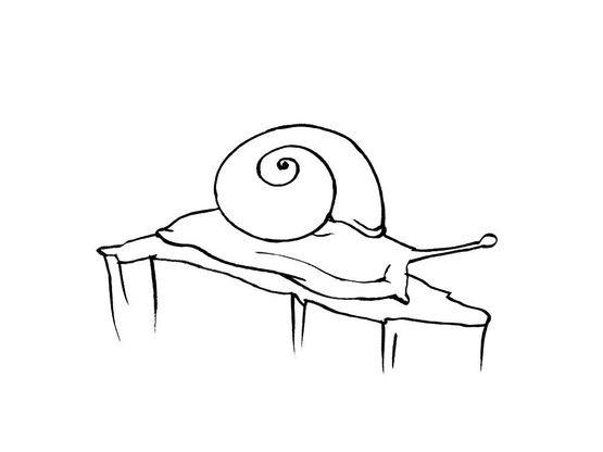 Coloriage Animaux Escargot.Coloriage Escargot 2 Coloriage Escargots Coloriages Animaux
