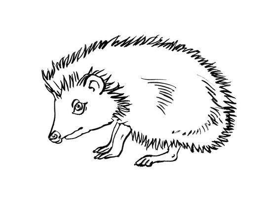 Coloriage Herisson.Coloriage Herisson 13 Coloriage Herissons Coloriages Animaux
