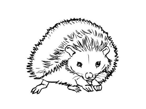 Coloriage Herisson.Coloriage Herisson 7 Coloriage Herissons Coloriages Animaux
