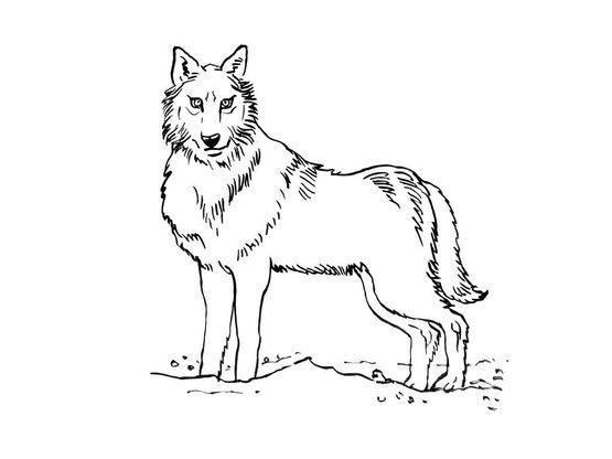 Coloriage Loup Dans La Foret.Coloriage Loup 1 Coloriage Loups Coloriages Animaux