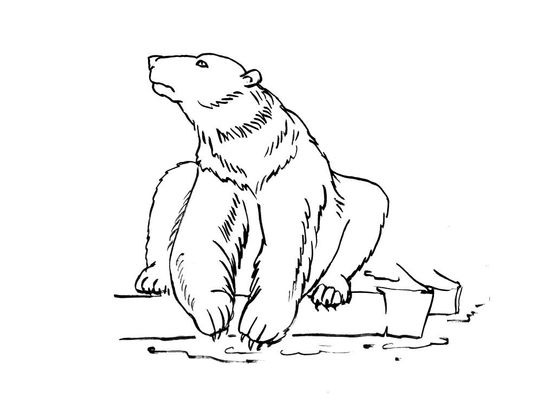 Animaux Coloriage Ourson.Coloriage Ours 15 Coloriage Ours Coloriages Animaux