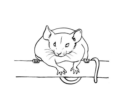 Coloriage Souris.Coloriage Souris 12 Coloriage Souris Coloriages Animaux