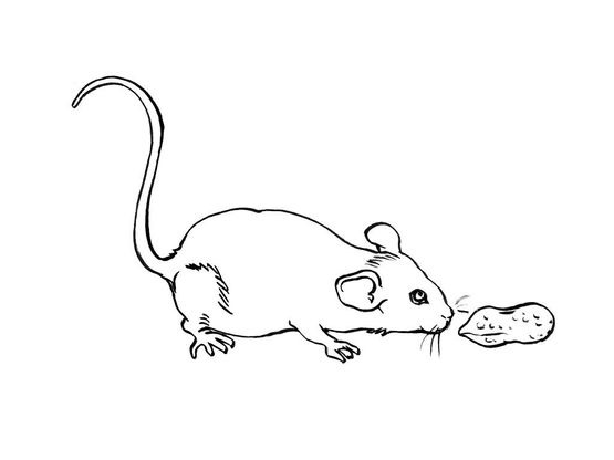 Coloriage Souris.Coloriage Souris 15 Coloriage Souris Coloriages Animaux