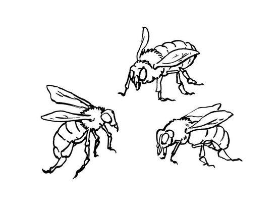 Coloriage abeille 14 coloriage abeilles coloriages animaux - Coloriage abeille ...
