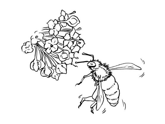 Coloriage abeille 7 coloriage abeilles coloriages animaux - Coloriage abeille ...
