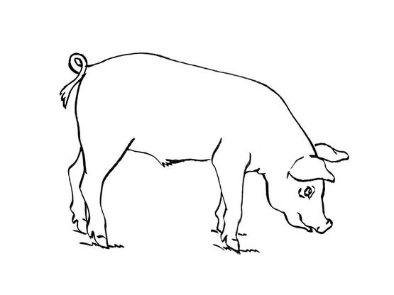 Coloriage cochon 10 coloriage cochons coloriages animaux - Dessin d un cochon ...