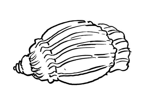 Coloriage coquillage 10 coloriage coquillages coloriages animaux - Dessin coquillage ...
