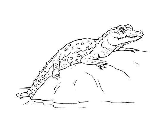 Coloriage crocodile 13 coloriage crocodiles coloriages animaux - Crocodile coloriage ...