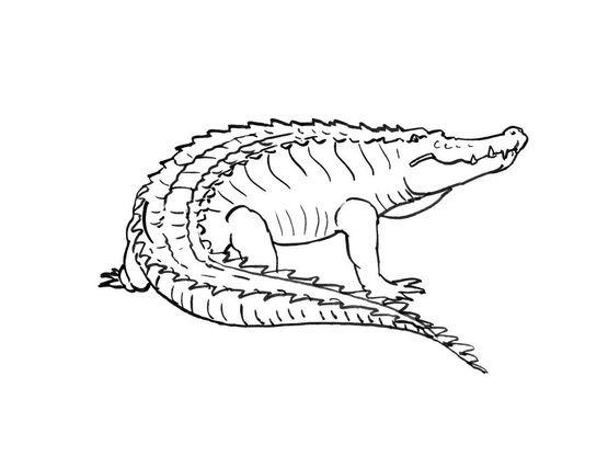 Coloriage crocodile 14 coloriage crocodiles coloriages - Image crocodile dessin ...