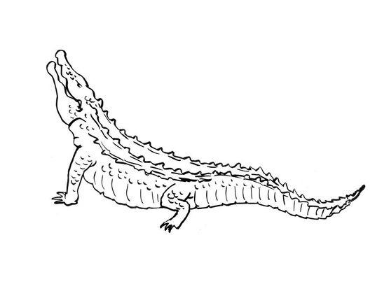 Coloriage crocodile 4 coloriage crocodiles coloriages animaux - Crocodile coloriage ...
