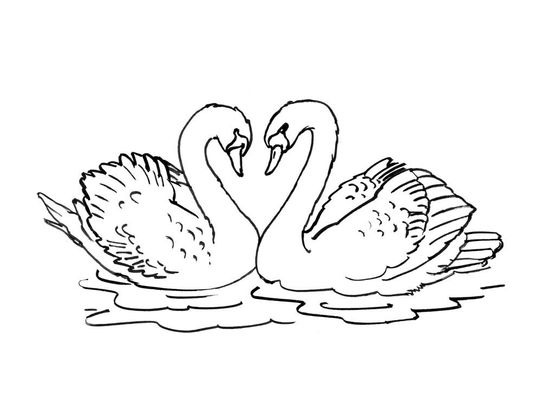 Coloriage cygne 2 coloriage cygnes coloriages animaux - Coloriage cygne ...