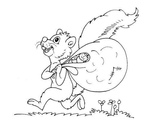 Coloriage ecureuil 27 coloriage ecureuils coloriages animaux - Coloriage ecureuil ...