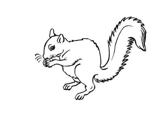 Coloriage ecureuil 3 coloriage ecureuils coloriages animaux - Coloriage d ecureuil ...