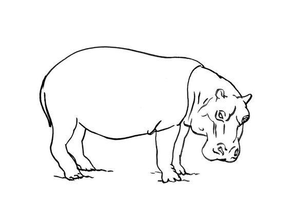 Coloriage hippopotame 4 coloriage hippopotames - Coloriage hippopotame ...