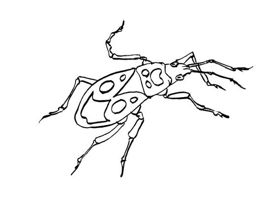 Coloriage insecte 10 coloriage insectes coloriages animaux - Coloriage insecte ...