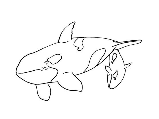 Coloriage mammif re marin 9 coloriage mammiferes marins coloriages animaux - Dessin d animaux marins ...
