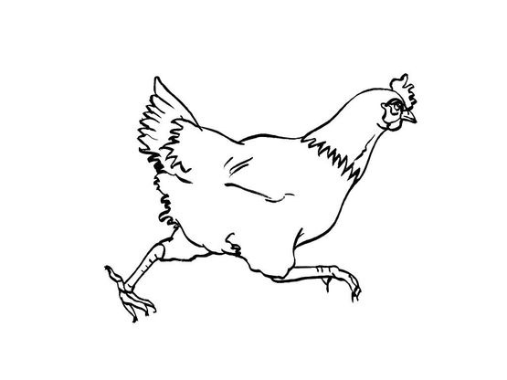 Coloriage poule 2 coloriage poules coloriages animaux - Coloriage poules ...