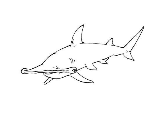 Coloriage requin 10 coloriage requins coloriages animaux - Dessin requin facile ...