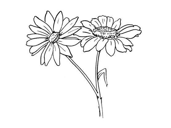 Coloriage fleur 1 coloriage fleurs coloriages nature - Coloriage marguerite ...