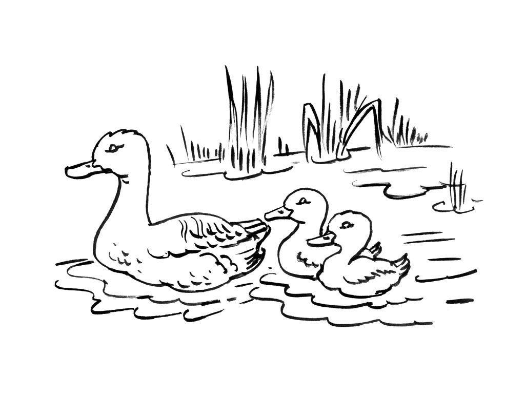 жизни рисунок утка с утятами идут к озеру выборгском районе