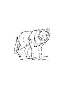 Coloriages Loups A Imprimer Coloriages Animaux
