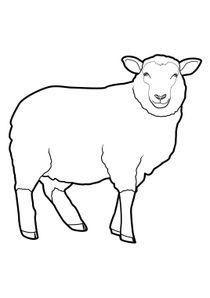 Coloriages Moutons A Imprimer Coloriages Animaux