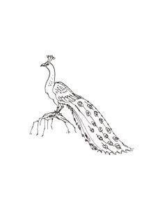 Coloriages Oiseaux à Imprimer Coloriages Animaux