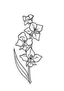 Coloriages Fleurs à Imprimer Coloriages Nature
