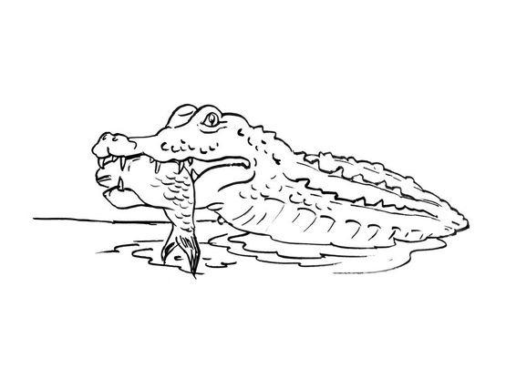 Coloriage Crocodile 2 Coloriage Crocodiles Coloriages Animaux