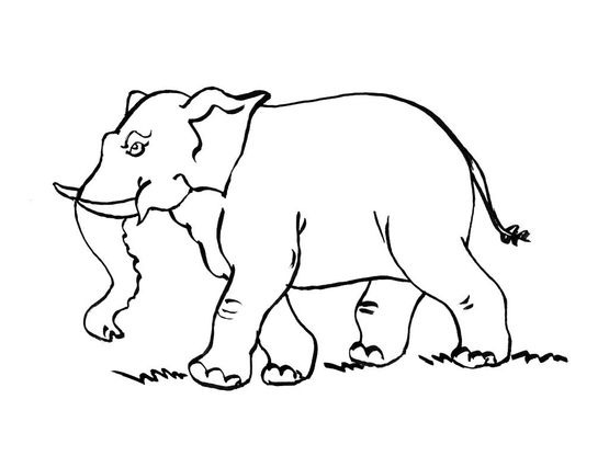 Coloriage Elephant 10 Coloriage Elephants Coloriages Animaux