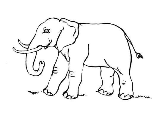 Coloriage Elephant 11 Coloriage Elephants Coloriages Animaux