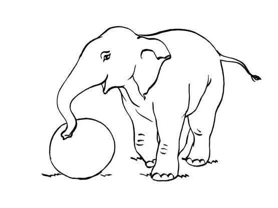 Coloriage Elephant 6 Coloriage Elephants Coloriages Animaux