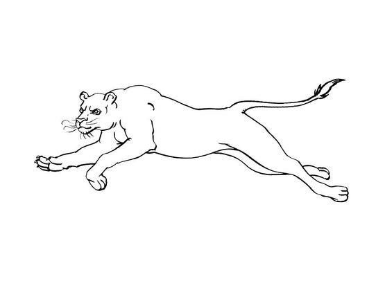 Coloriage Felin 13 Coloriage Felins Coloriages Animaux