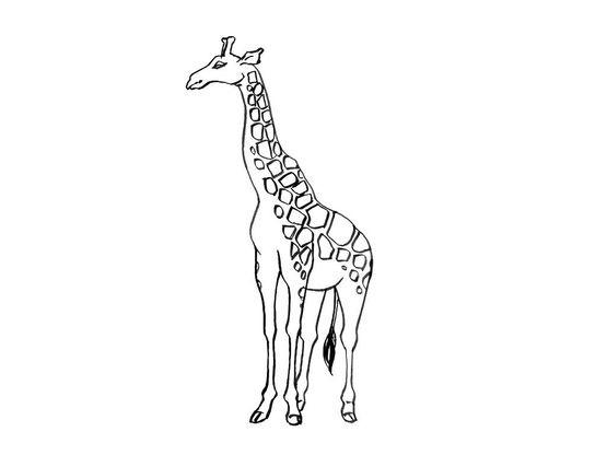 Coloriage Girafe 12 Coloriage Girafes Coloriages Animaux