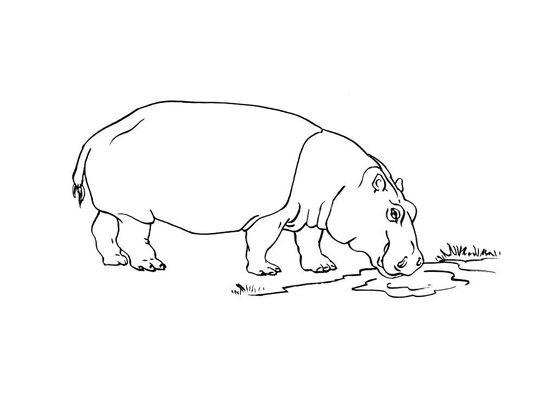 Coloriage Hippopotame 6 Coloriage Hippopotames