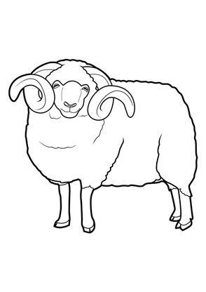 Coloriage Mouton 1 Coloriage Moutons Coloriages Animaux