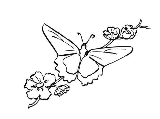Coloriage Papillon 7 Coloriage Papillons Coloriages Animaux