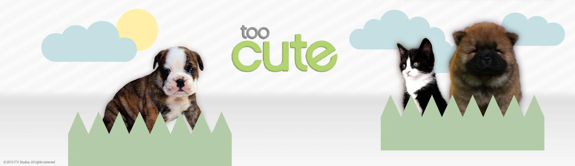 Too Cute en streaming sur Gulli Replay