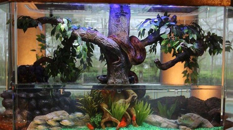 Aquamen : les as des aquariums L'aquarium de David Hasselhoff