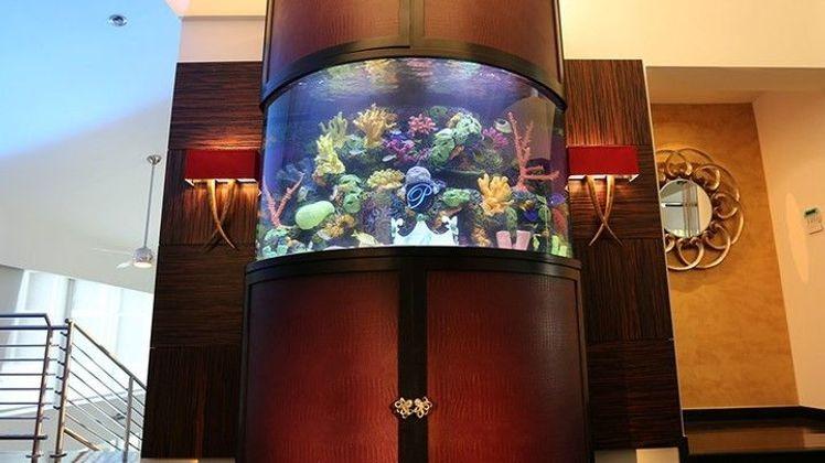 Aquamen : les as des aquariums Le défi de Miami